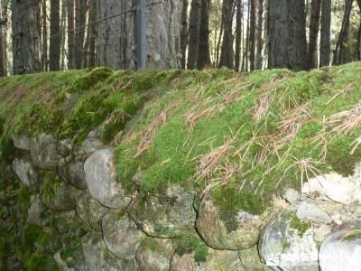 Bosque de Finlandia - Valle de El Paular;ruta sierra de madrid visitas guiadas madrid mapa senderism